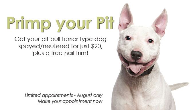 Primp your Pit special