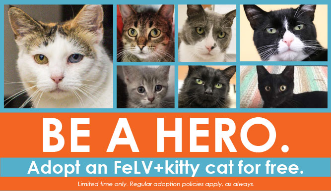 Be a hero - Adopt an FeLV cat Free