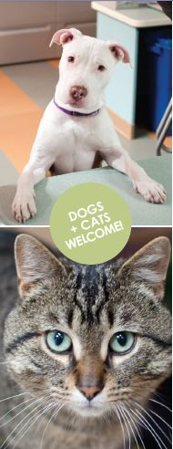 Dogs and Cats welcome at our Low Cost Vaccine Clinics