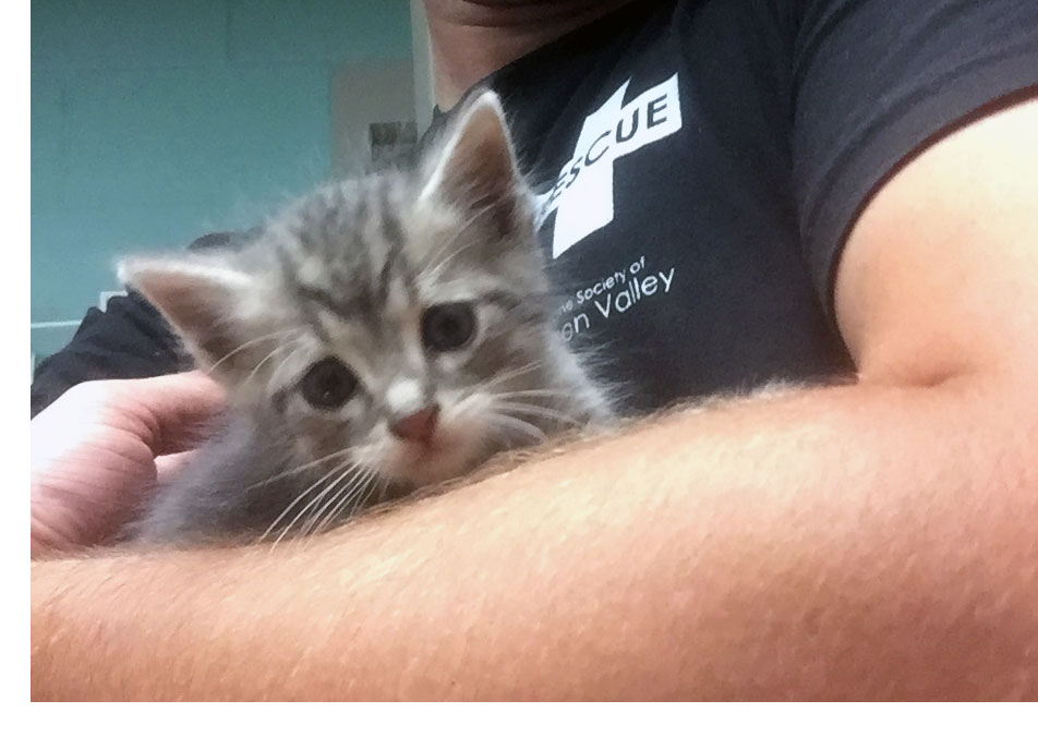 Kitten rescue in Ypsilanti