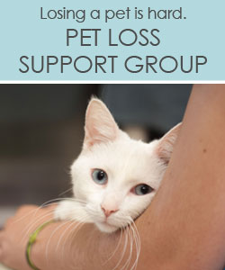 Pet Loss Support Group