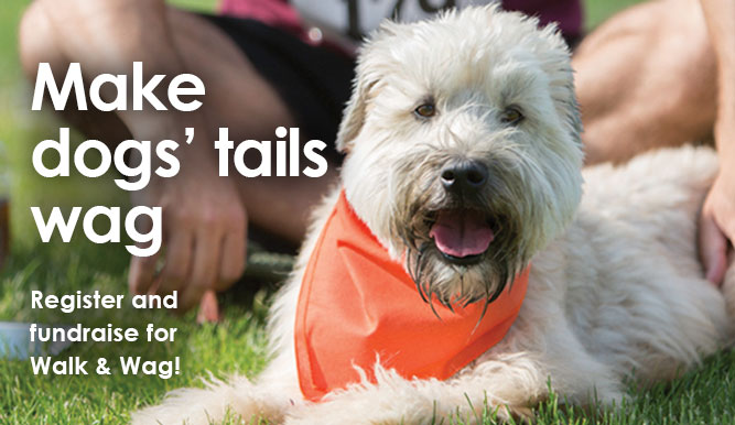 Register and fundraise for Walk & Wag