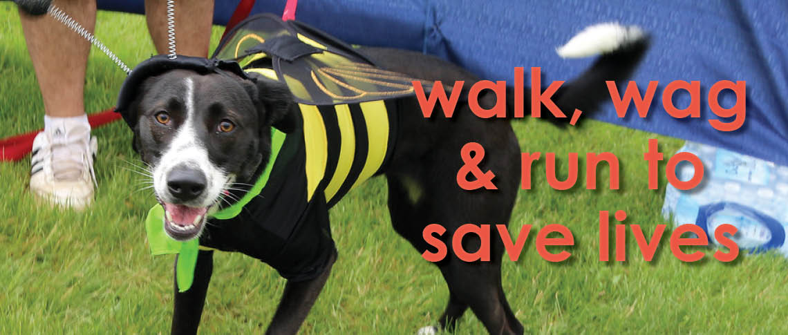 Walk, wag and run to save lives