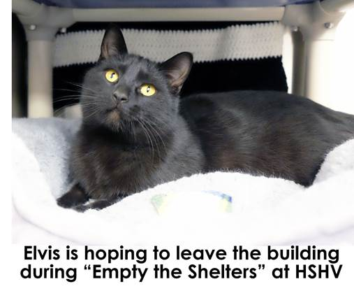 Elvis hopes to leave the building at Empty the Shelters