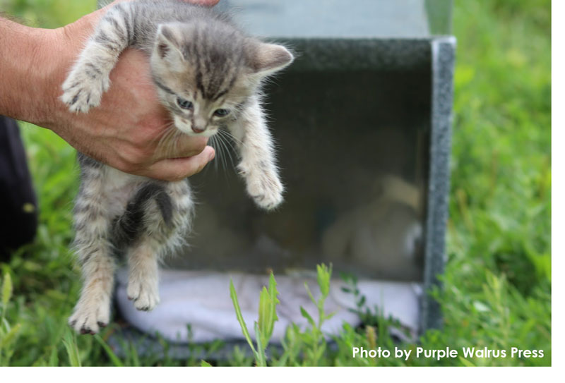 Kitten rescue in Ypsilanti, courtesy Purple Walrus Press